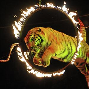 Цирки Ивота