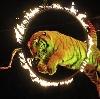 Цирки в Ивоте