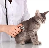 Ветеринарные клиники в Ивоте